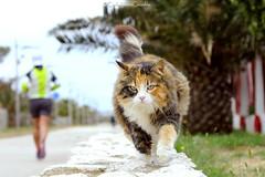 . (CarloAlessioCozzolino) Tags: gatto cat poetto sardegna sardinia animali animals quartusantelena