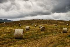 Rotolando / Rolling (Eugenio GV Costa) Tags: approvato campagna nuvole cielo alberi countryside clouds sky trees outside balle fieno bales hay