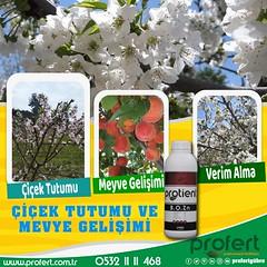 profert bozn (Profert Gübre) Tags: tarım meyvecilik meyve mersin fertilizer profert