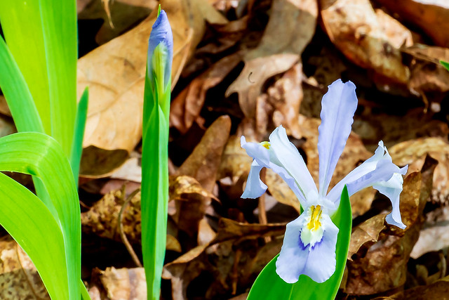 2019.04.22_hoosier-national_shirley-creek_1861_crop2