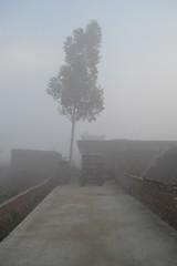 Vaguely familiar (noitalsnarT_nI_tsoL) Tags: tree fog misty mist hidden surreal chilly winter cold dawn sky walls bricks concrete path entrance eucalyptus tractor morning foggy