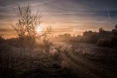 The mistery of the morning... (Giacomo della Sera) Tags: arbol tree camino path sol sun sunshine amanecer nature naturaleza spain españa europa europe atmosphere atmosfera mañana morning warm calidez