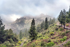 Gran Canaria (denismartin) Tags: denismartin canaries canarias travel sea mountain grancanaria weather cloud fog foggy roquenublo