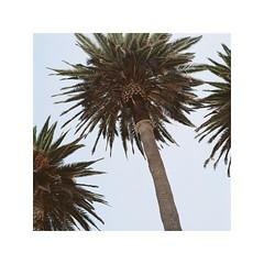 R1-02857-00052 (AStomatin) Tags: plants analog film africa medium format bronica kodak portra travel trip sky