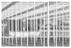 The making of a new greenhouse _ 3 (leo.roos) Tags: hothouse greenhouse kas noiretblanc monster westland molenweg boomaweg a7iii sonyfe100400mmf4556gmoss sel100400gm sonyfe1004004556 darosa leoroos