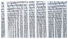 The making of a new greenhouse (leo.roos) Tags: hothouse greenhouse kas monster westland molenweg boomaweg a7iii sonyfe100400mmf4556gmoss sel100400gm sonyfe1004004556 darosa leoroos