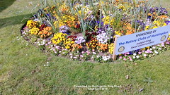 Flowerbed on Huntingdon Ring Road 22nd April 2019 (D@viD_2.011) Tags: flowerbed huntingdon ring road 22nd april 2019
