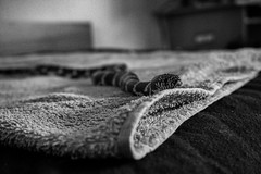 Photo (BadSoull) Tags: photo europe czech republic sony a6300 mirrorless 2019 bnw black white blackwhite abstract animal snake pet cute prague