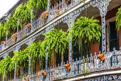 Meet Me in New Orleans (Thomas Hawk) Tags: america frenchquarter louisiana neworleans us usa unitedstates unitedstatesofamerica balcony fern