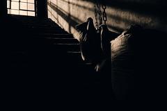 Shadows... (hobbit68) Tags: fujifilm xt2 frankfurt fechenheim zement windows fenster shadows schatten industrie industry industriegebiet lost verfallen verlassen vergessen treppenhaus steps stufen sonnenschein sonne