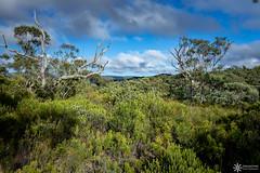 Blue Mountains National Park (Dreamtime Nature Photography) Tags: bluemountainsnationalpark sydney nsw australia newsouthwales beach ocean plage mer canon landscape paysage dreamtimenaturephotography