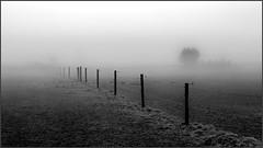 Fog in the fields (Eva Haertel) Tags: eva haertel canon5dmarkiii natur nature landschaft landscape feld field wiese meadow fence zaun diagonal silhouette schwarzweis sw blackandwhite bw wetter weather nebel fog mist mood stimmung beblig