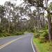 a0571_Kilauea_ChainOfCratersRd_aDSC_0571