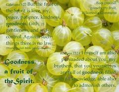 gooseberry goodness Fruit of the Spirit (Martin LaBar) Tags: fruitofthespirit fruit gooseberries grossulariaceae goodness spirit galatians52223