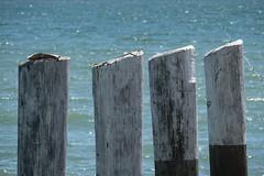 015655-_1122352 (aussiephil1960) Tags: post pole pier