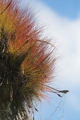 Guatemalan Epiphyte (peterkelly) Tags: digital canon 6d gadventures mayandiscovery northamerica centralamerica guatemala tikalnationalpark epiphyte plant forest tree peten
