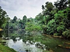 Forest Reserve Lake Jalan Merbah 10/1, Kota Damansara, 47810 Petaling Jaya, Selangor https://maps.app.goo.gl/AJnjC  https://foursquare.com/soonlung81  https://maps.app.goo.gl/CPWsi  https://www.instagram.com/s/aGlnaGxpZ2h0OjE3OTg5MjE3NzM0MjEzMDE2/?utm_sou (soonlung81) Tags: reizen semester 여행 viaggio malaysia lake vakantie holiday asian 馬來西亞 การเดินทาง 휴일 see trip fiesta 湖 ทะเลสาป vacances озеро tasik بحيرة سفر 亞洲 путешествие 度假 旅行 voyage lago lac عطلة праздник vacanza resa วันหยุด asia meer ホリデー viaje 호수 reise urlaub travel sjö