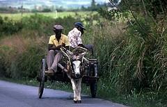 Donkey Cart (www.Barbados.org) Tags: tbt vacation holiday travel barbados