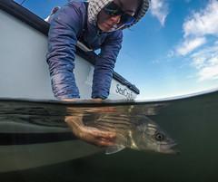 G0020385-1 (Woozy Fishing) Tags: eastgreenwich rhodeisland unitedstatesofamerica