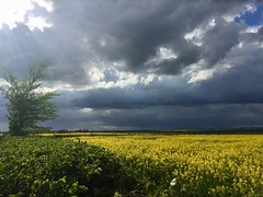 (lesleydoubleday) Tags: weather clouds rape leicestershire