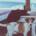 Beach dog thumbnail