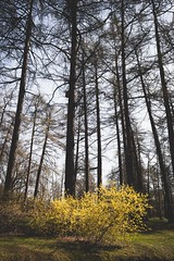 Magical spring (oksanamaselko) Tags: mood maselkophoto cozyphoto nikon inspiration