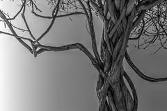 old wood (jcc90) Tags: d3200 nikon nature black white beginner