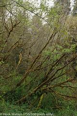 DSC01956 medium.jpg (henk.wallays) Tags: california usa inat bradsplace aaaa delnortecounty location henkwallays closeup macro nature natuur wildlife size date year2019 medium
