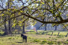 Emsland_Frühling_IMG_9083 (milanpaul) Tags: 2019 apri baum canoneos6d deutschland emsland frühling germany landscape landschaft lingen niedersachsen pferd