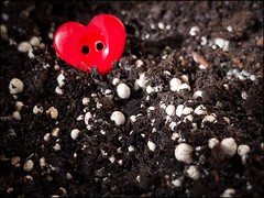 2019-04-26 I love button mushrooms (Allan Henderson) Tags: mushrooms red button funky fungi iphone 7 heart shape aldi kit
