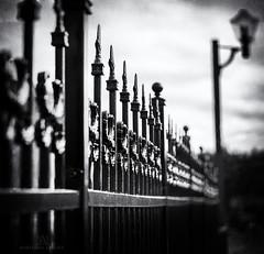wrought iron fence (marianna armata) Tags: wraught iron fence fancy posh detailed metal pattern repetition bw monochrome marianna armata hff street lamp