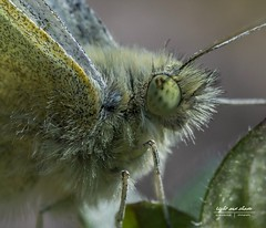 Eye in eye with a butterfly (Light and shade by Monika) Tags: