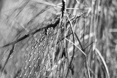 (Pea Jay How) Tags: nature focus grass bokeh blur bw blackandwhite monochrome mono dof hff fencefriday friday fence