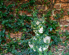 An  Archaeological  seach in Sylvania has found the remains of the old Roman._ (lindsayholley) Tags: statue sculpture garden plants fence brick concrete tree lawn weeds face eyes mouth white green leaves nikon d750 2470mm
