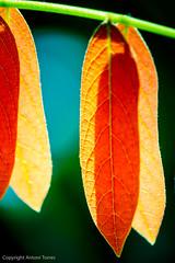 Duplicitats (vfr800roja) Tags: moramanga regióndealaotramangoro madagascar