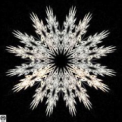 135_00-Apo7x-190422-11 (nurax) Tags: fantasia frattali fractals fantasy photoshop mandala maschera mask masque maschere masks masques simmetria simmetrico symétrie symétrique symmetrical symmetry spirale spiral speculare apophysis7x apophysis209 sfondonero blackbackground fondnoir
