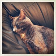 t. (ghiro1234 [♀]) Tags: tronchi gatto gattodicasa hipstamatic robertaghidossi iphone