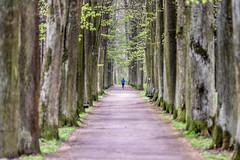 The run (Paul wrights reserved) Tags: leadinglines leading tree trees spring woman run running jog jogger slovakia slovensko leaves leaf path diminishing