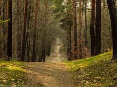 Lonesome hikers (Steppenwolf33) Tags: hiker forest dunes wilhelmhagen köpenick steppenwolf33 way tree ngc
