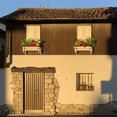 (Paolo Cozzarizza) Tags: italia friuliveneziagiulia pordenone spilimbergo scorcio alberi muro fiori piante