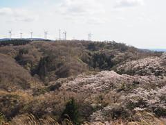 the hill in spring (murozo) Tags: hill sakura cherry blossom wind generator mountain mtchokai sky spring yurihonjo akita japan 桜 花 春 風車 風力発電 丘 山 鳥海山 にかほ 秋田 日本