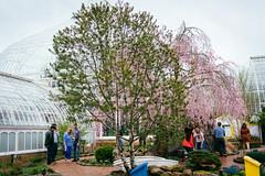 Phipps garden (Graham Gibson) Tags: sony a7rii voigtlander 40mm f12 nokton fe phipps conservatory pittsburgh gardens