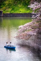 Chidorigafuchi (Damien Borel) Tags: rouge tokyo japan cherryblossoms2019 sakura2019 chiforigafuchi sakura blossom cherryblossoms mefoto mefototripods travel a7rii sony boblastic sonyalpha sonyalpha7rii