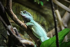 A reptile (JaaniicB) Tags: canon eos 1200d sigma 1750mm f28 lizard reptile