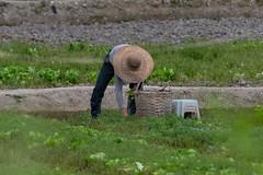 _5ND7378_LR_LOGO (Ray 'Wolverine' Li) Tags: hongkong farming farm farmer citylife hongkonglife happyplanet asiafavorites asian