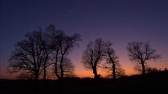 Mond&Venus&Jupiter&Eichen-03 (NiBe60) Tags: deutschland bayern oberbayern abend sonneuntergang dämmerung himmel blaue stunde mond sichel venus bäume eichen germany bavaria upper evening sunset dusk sky blue hour moon sickle trees oak