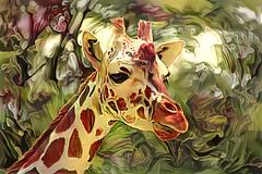giraffe portrait (LotusMoon Photography) Tags: giraffe animal zoo nature photomanipulation photoart manipulated edited digital digitalart deepstyle ddg deepdreamgenerator dreamlike postprocessed annasheradon lotusmoonphotography