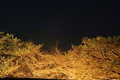 Golden gloomy_vol02 (hitsujida) Tags: canon g7xmkii ordinary everyday city town flower koyo 街 日常 京都 花