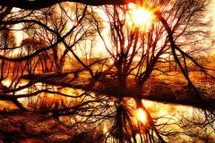 Magical morning (prokhorov.victor) Tags: утро природа лес озеро отражение деревья пейзаж солнце