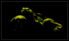 From The Deep (Seeing Things My Way...) Tags: turtle amphibian animals tarongazoo zoo minimalism